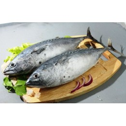 TUNA (Choora )