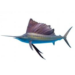 SAIL FISH (OLAKKODIYAN)